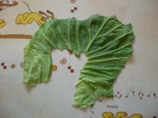 cabbage03.jpg